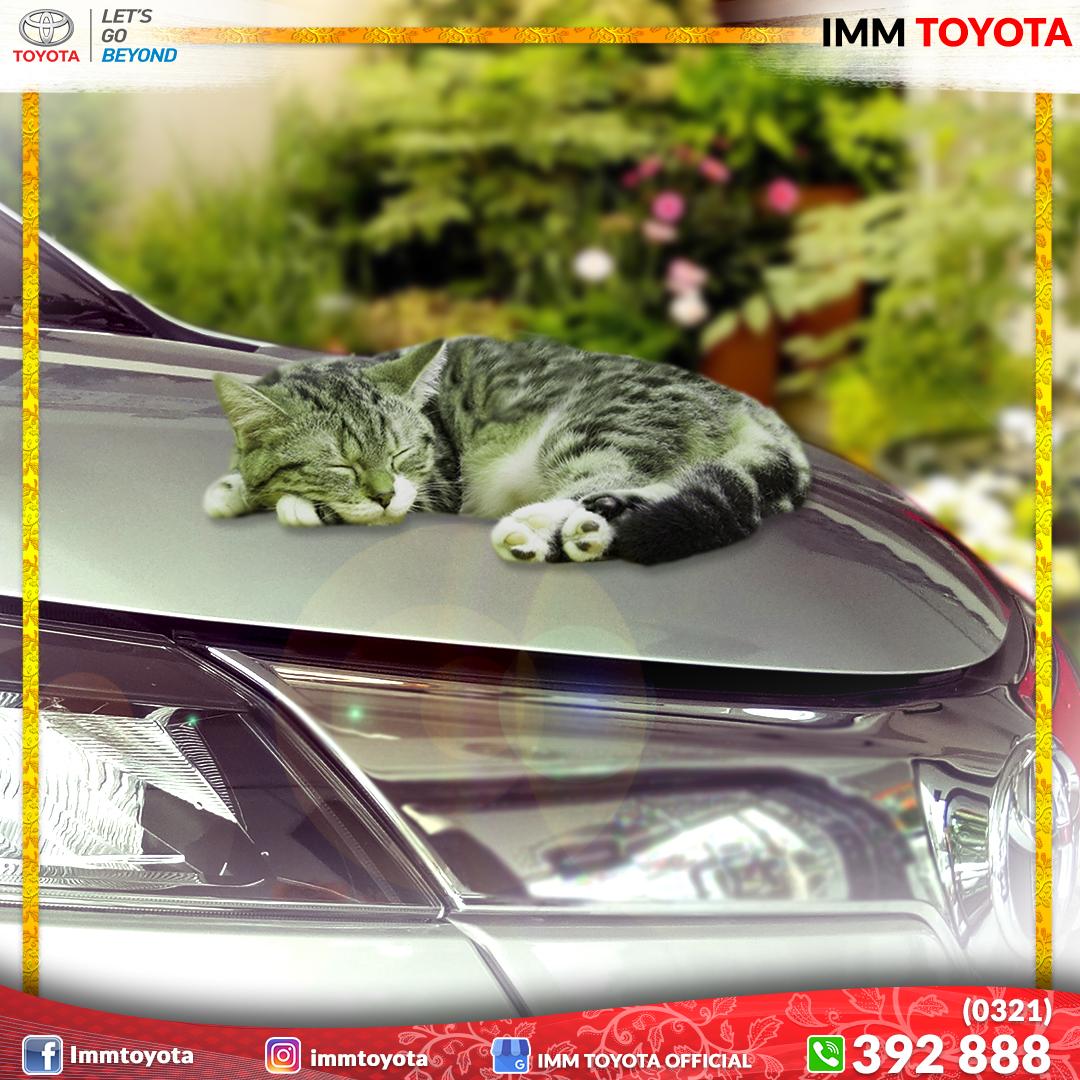 Kenapa suka ada kucing tiduran di kap / kolong mobil?