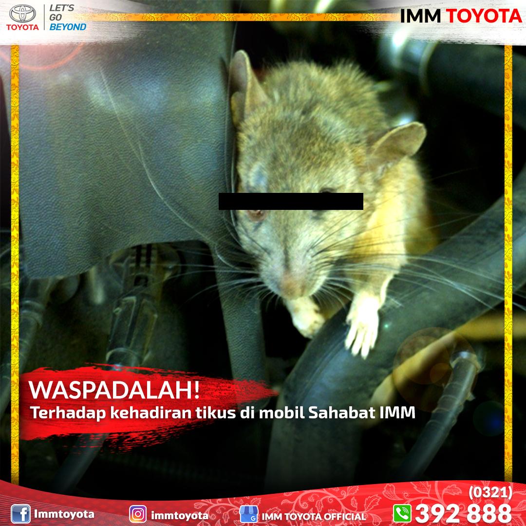 Waspada! Ada tikus di mobil...